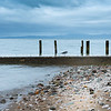 Old pier or breakwater posts on beach at Tararu North Thames.