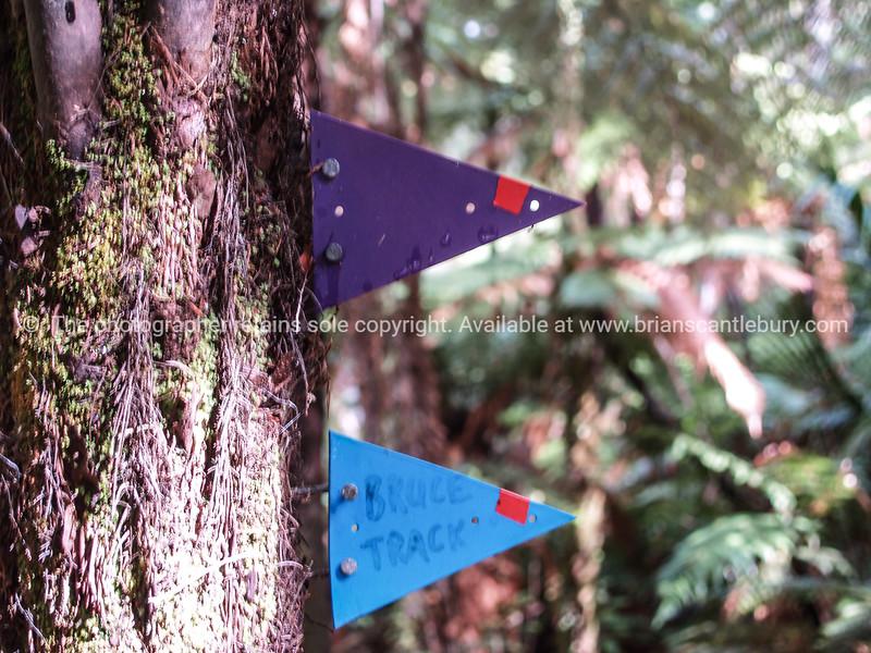 Trap line flags, Coromandel. New Zealand images.