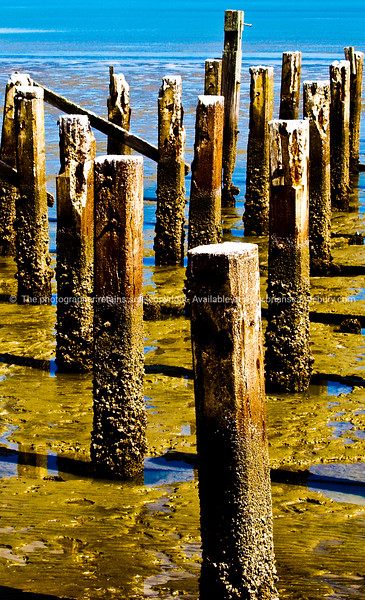 Old Burke street Wharf, piles, Thames, NZ. New Zealand photographic stock images.