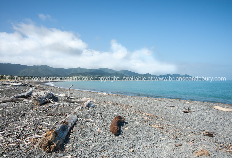 Torere Bay. East Coast. New Zealand Images.