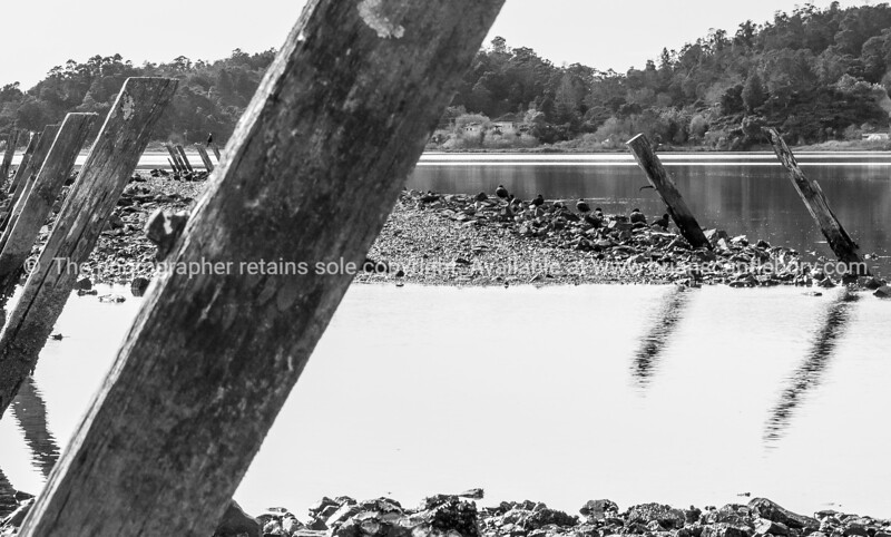 Monochrome, Ohiwa Harbour, Bay of Plenty