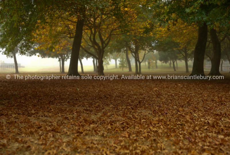 Under the trees, misty autumn morning in Hamilton.