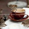 Cafe sparrows.