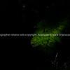 Tree fern frond caught is shaft of sunlight along bush track