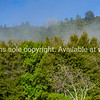 Typical New Zealand bush scene along walk with background hills and morning mist lifting.