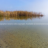 Lake Okaera edge with aquatic vegetation reflected in calm water