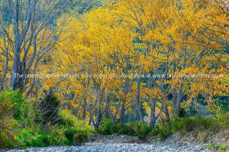 Trees in new spring growth with autumn colours