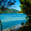 Bay in Marlborough Sounds.