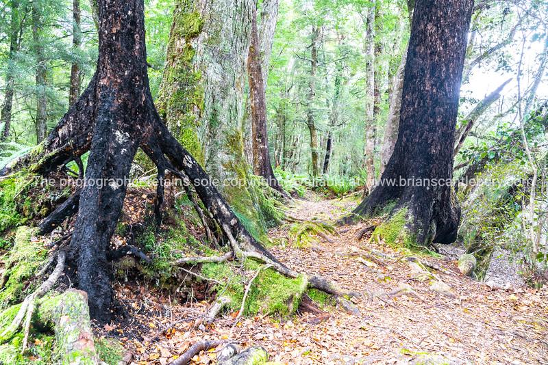 Braeburn Track near Lake Rotoroa