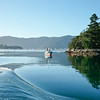 Beautiful calm water of Marlborough Sounds, mildly disturbed by wake of boat. New Zealand images.