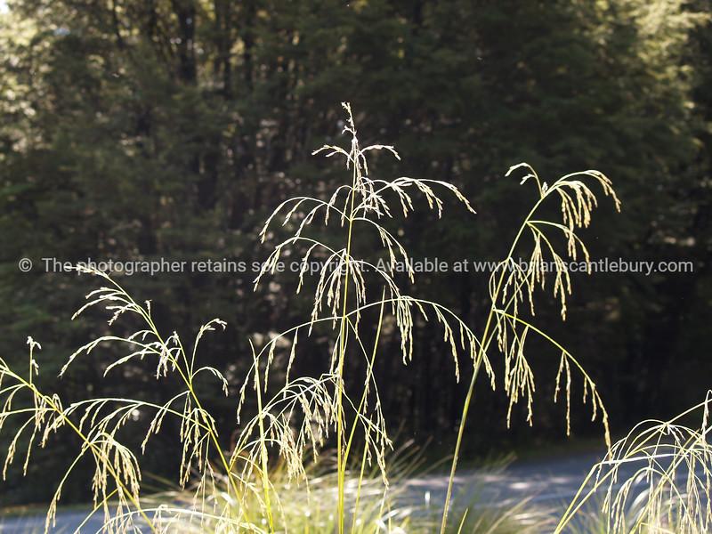 Lakeside grass.