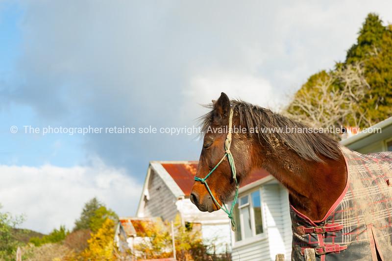Brown horse portrait.