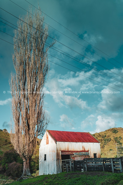 Old corrugated iron farm building and yard with tall leafless birch tree buildings,