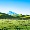 Mount Egmont snowcapped between rolling green pastures