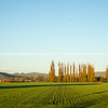 Hawkes Bay rural land. New crop surrounded by hills. New Zealand images.