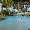 Scenic bay under pohutukawa tree, Ngunguru, Northland