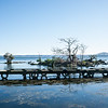 Jetty near Sulphur Bay on Lake Rotorua