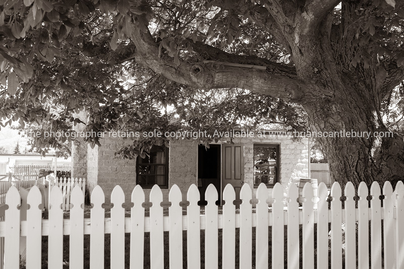 Old cottage under big spreading tree and behind white picket fence.