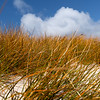 Golden marram grass on sand dune under blue sky with white cloud on Stewart Island,