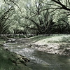 Stream flowing through land between arching willow trees