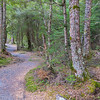 New Zealand great walk walk on Keplar Track in Fiordland