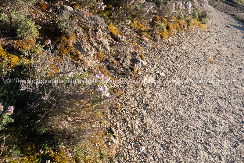Small plants and wildflowers covering the ground in area of Bannockburn sluicings, outside Cromwell and the altered landscape South Island, New Zealand.