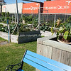 "Community garden plots, Otumoetai, Tauranga.<br /> Train passes in background. See;  <a href=""http://www.blurb.com/b/3811392-tauranga"">http://www.blurb.com/b/3811392-tauranga</a> mount maunganui landscape photography, Tauranga Photos; Tauranga photos, Photos of Tauranga Also see; <a href=""http://www.brianscantlebury.com/Events"">http://www.brianscantlebury.com/Events</a>"