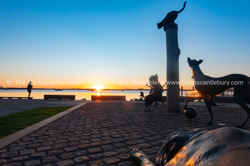 Hairy Maclary animal statues on Tauranga city waterfront