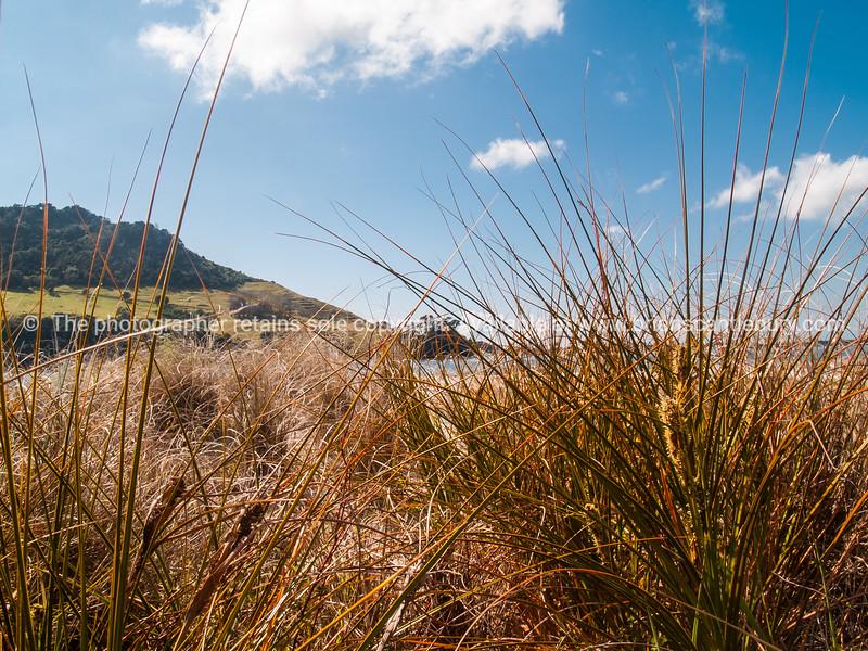 Mount Maunganui through Matakana Island marram grass.