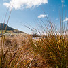 Mount Maunganui through Matakana Island marram grass.