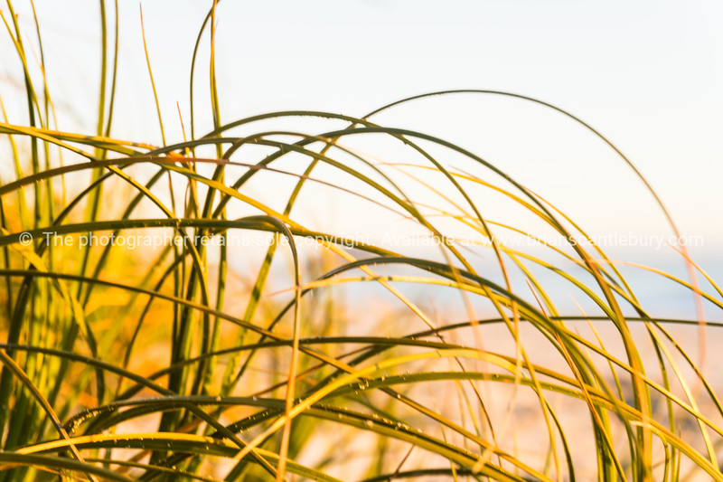 Beach grass abstract