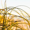 Beach grass abstract