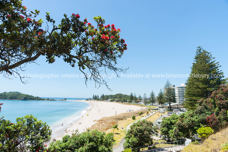 Ocean beach view over and framed by pohutukawa trees from slope of Mount Maunganui