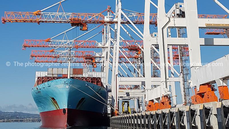 Port of Tauranga container terminal