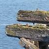 Rustic pier timber