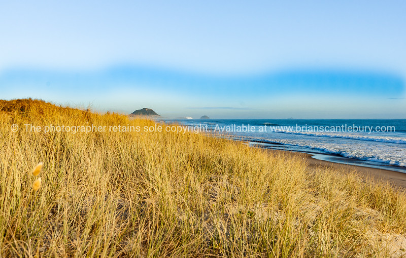 Golden beach grass sloping to water's edhe with landmak Mount Maunganui and cruise ship in distance