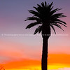 Palm tree silhouette against intensely colored sunset sky