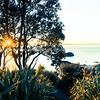 Sun bursts over distant horizon through pohutukawa tree silhouette on lower Mount Maunganui slopes