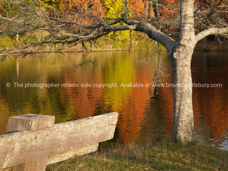 Mclaren Falls Lake  with lakeside seat under tree and autumn colours reflected on water.