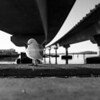 Seagull under sweeping structural lines of Tauranga Harbour Bridge from below over calm blue water