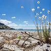 Beach scene Mount Maunganui across Tauranga Harbor from Matakana Island