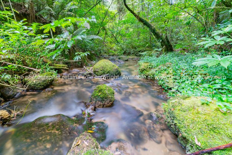 Flowing stream through New Zealand native bush