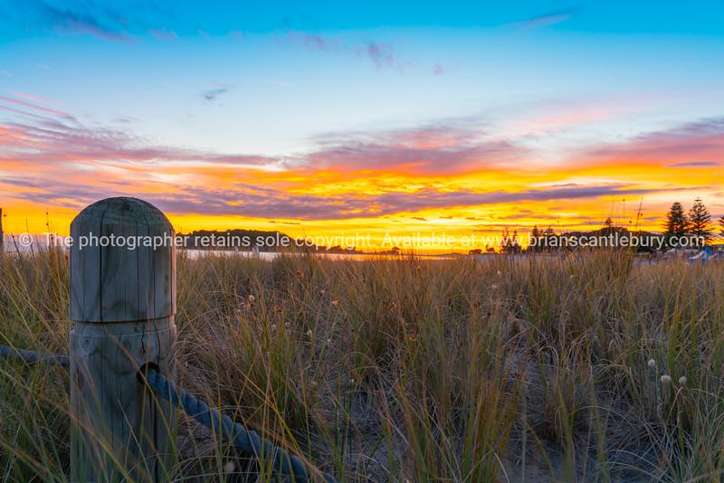 Intense sunrise beyond dune restoration planting at Mount Maunganui