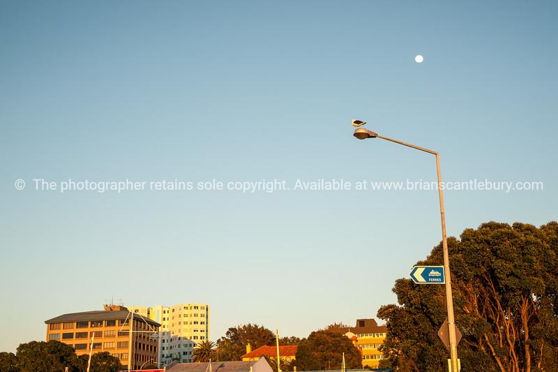 "Tauranga City CBD skyline at sunrise, with moon.-396 See;  <a href=""http://www.blurb.com/b/3811392-tauranga"">http://www.blurb.com/b/3811392-tauranga</a> mount maunganui landscape photography, Tauranga Photos; Tauranga photos, Photos of Tauranga Also see; <a href=""http://www.brianscantlebury.com/Events"">http://www.brianscantlebury.com/Events</a>"