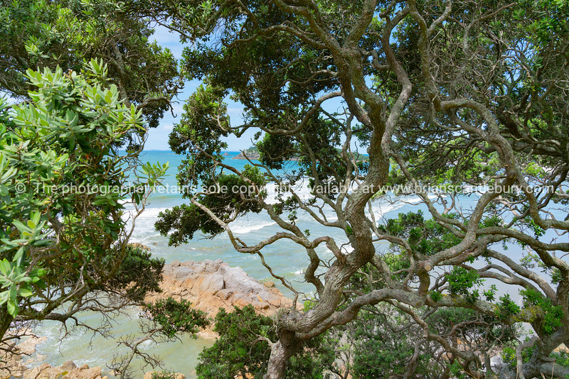 View through tangled branches and green leaves to turquiose sea and and white water of surf break