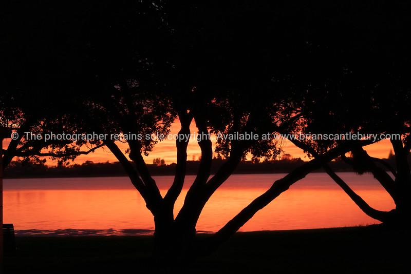 Vibrant sunrise in red backlights pohutukawa tree
