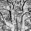 Picturesque Snow laden tree branches