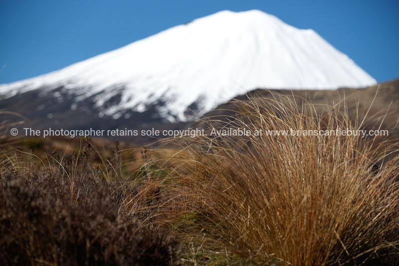 Mount Ngauruhoe beyond alpine vegetation.