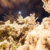 Picturesque night image, snow laden trees