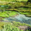 Algae and water plants in the scenic Te Waihou River, Waikato
